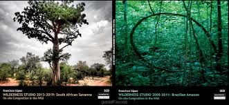 WILDERNESS STUDIO 2005-2019. BRAZILIAN AMAZON- SOUTH AFRICAN SAVANNA